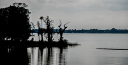 Everglades (5)