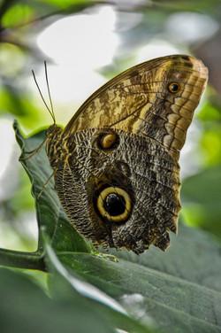 Butterfly (12)