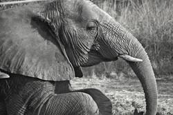 Elephant 5-2