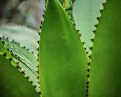 Thorns (3)