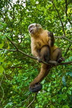 Macaque-2