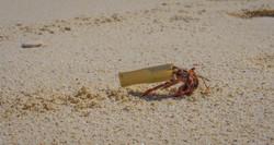 Hermit Crab-2