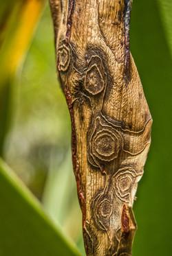 Leaf (6)