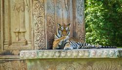 Tiger 10-2