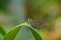 Moth (6)