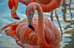 Flamingo-2