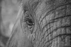 Elephant 3-2