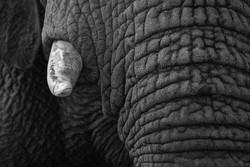 Elephant 2-2