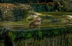 Bird (3)