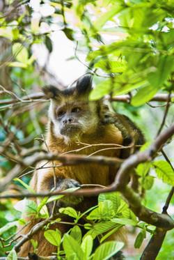 Macaque 2-2