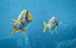Pork Fish (2)