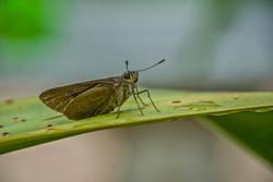 Moth (4)