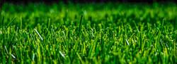 Grass (2)