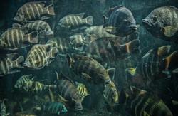 School of Fish (6)