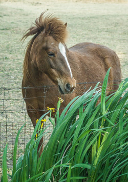 Horse 3-2