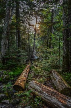 Mount Washington (7)