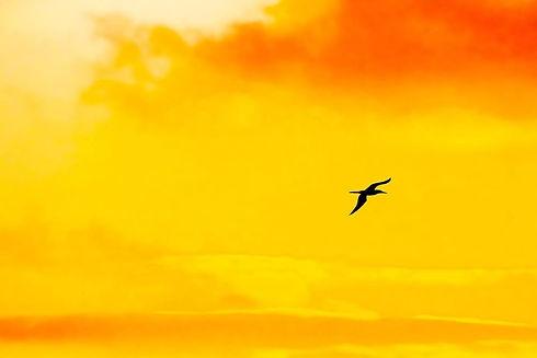 BirdCross - 1-2-17.jpg