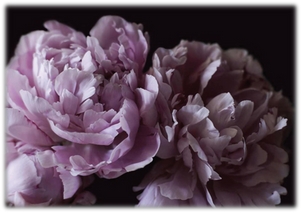 Flowers-07.png