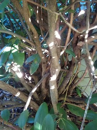 Pruning2.jpg