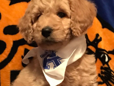 The Pets of Kentucky Are Representin'