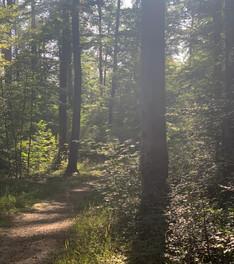 Randonnée de 15,2 km en forêt de Haye