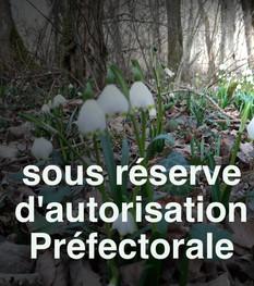 Randonnée des Nivéoles sous réserve d'autorisation Préfectorale...