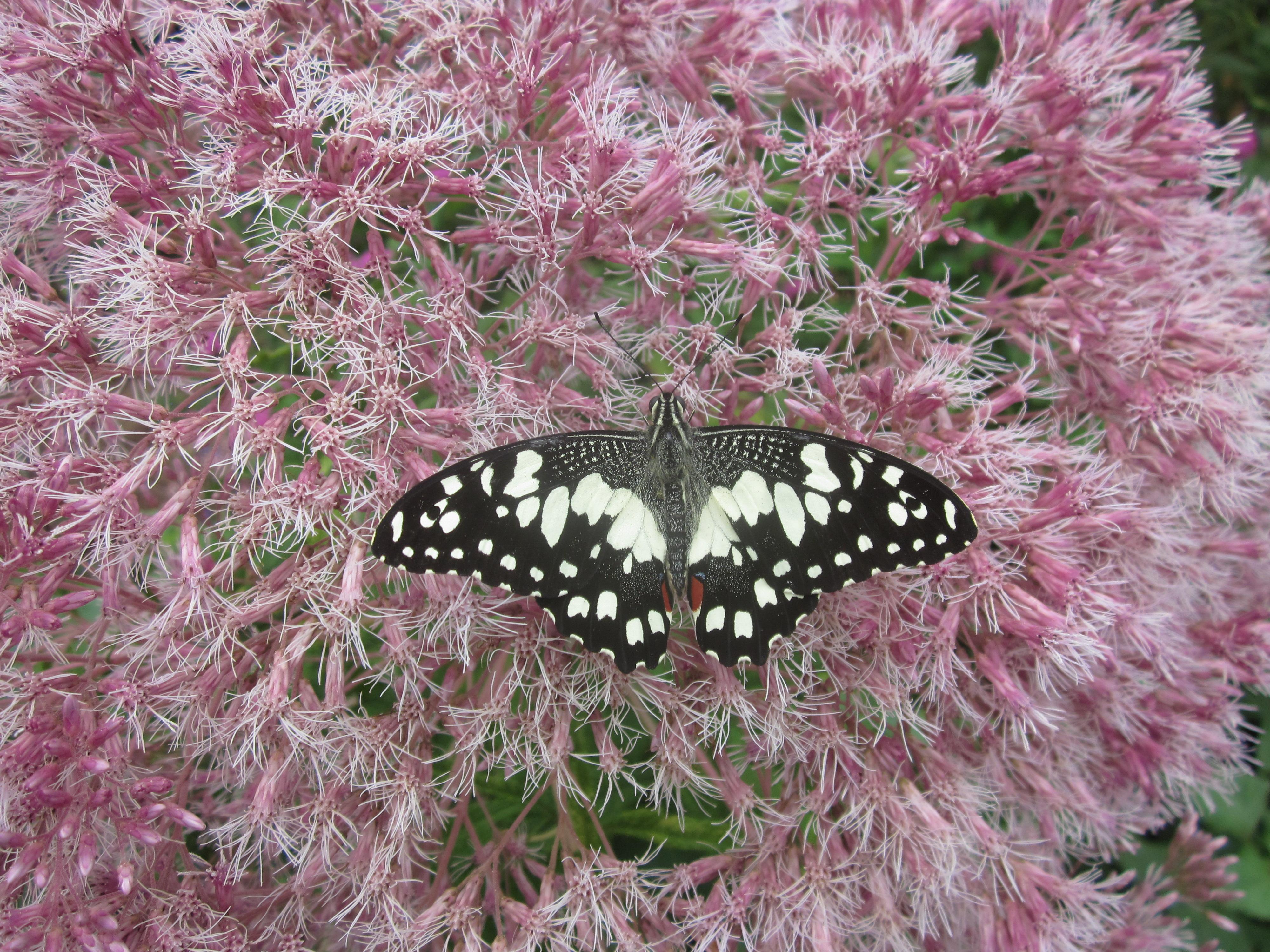 073_2014 Ray Bribie Garden Club pics 058