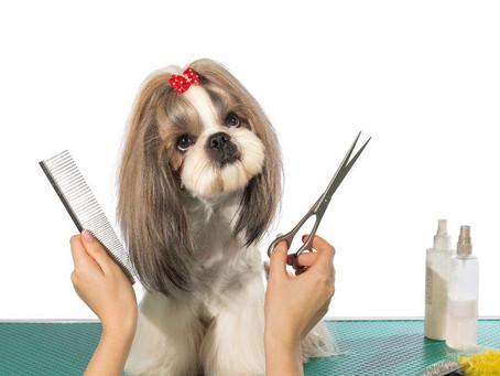 ¿Quieres cortar el pelo de tu perro en casa? Lee nuestras recomendaciones