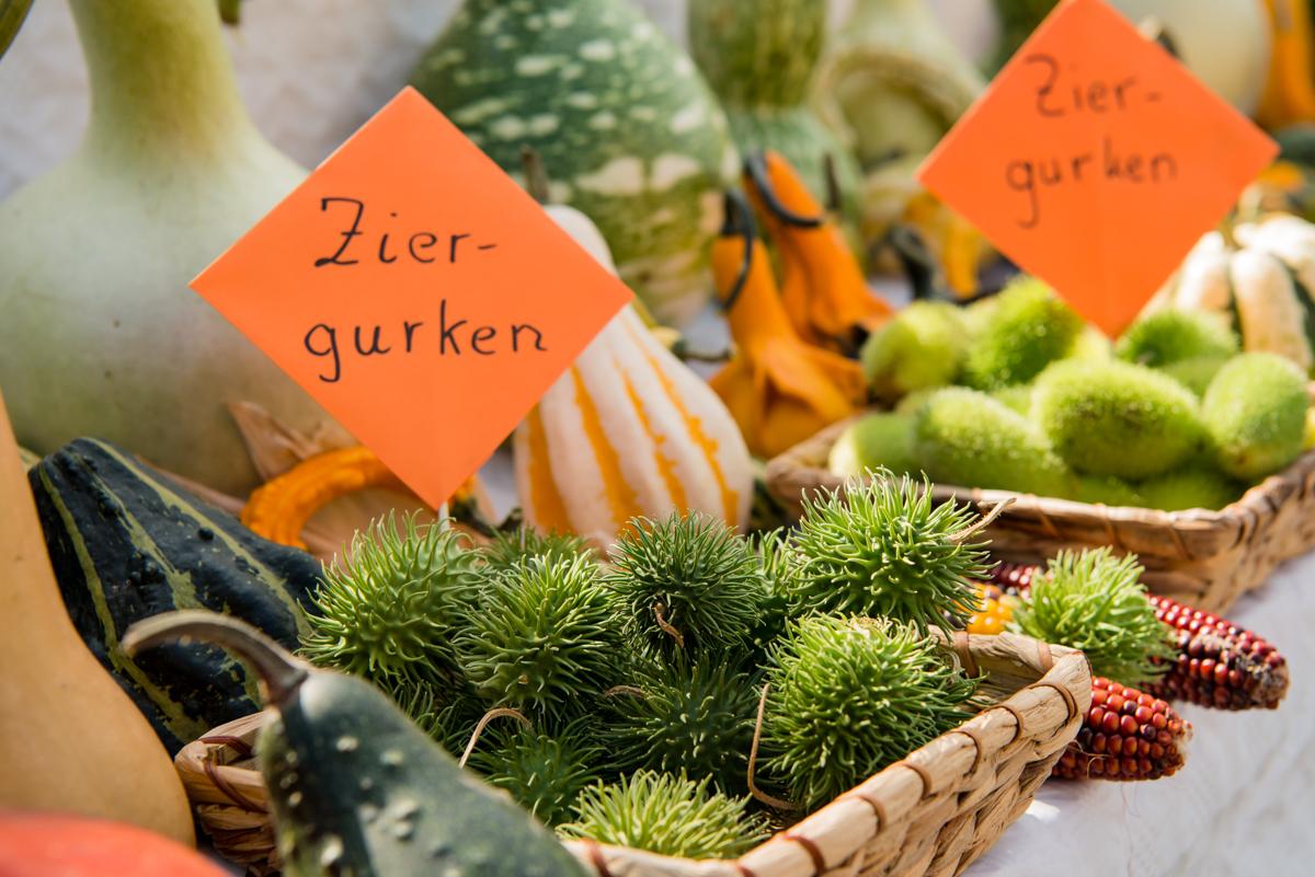 2017_09_Ochs_Genusstag_Zapfendorf_Web-53