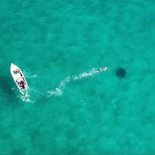 Tagging free-swimming reef mantas (BIOT MPA)