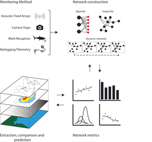 Networks in movment ecology