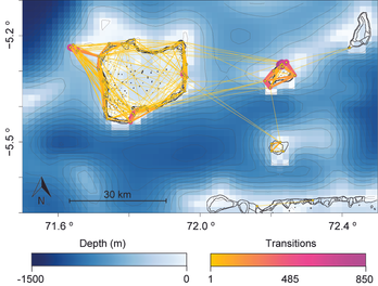 Weight movement network of reef sharks in the northern atolls of the BIOT MPA