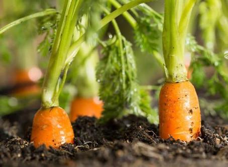 Starting An Indoor Garden