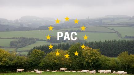 Il faut sauver le modèle d'élevage bovin de viande française