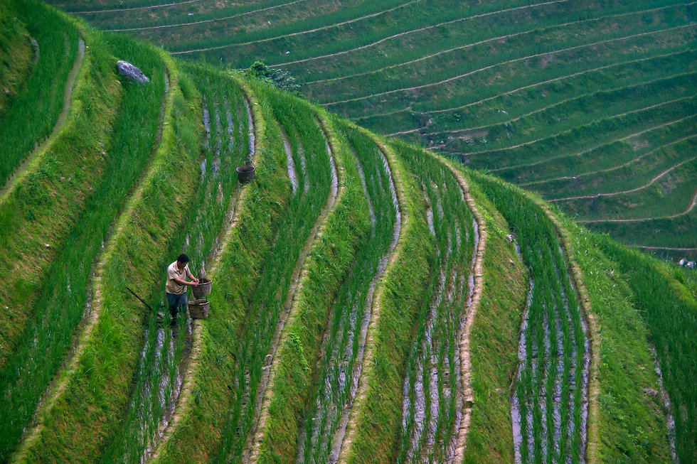 Agriculture_Chine_2.jpg