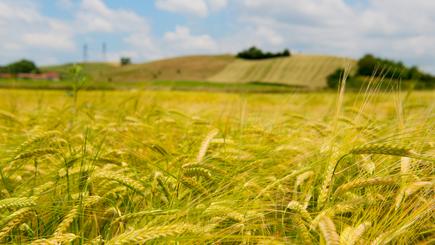Pour un patriotisme agricole : nourrir sans faillir ! *