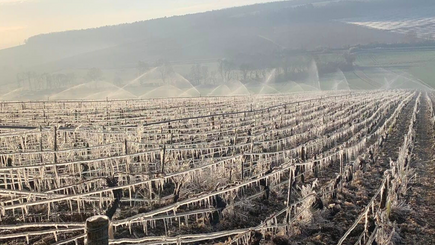 Quelle aide pour les viticulteurs après l'année noire 2021 ?