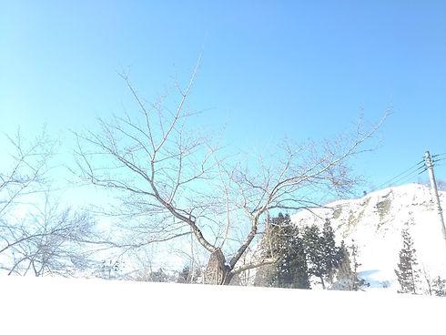冬晴れ.JPG