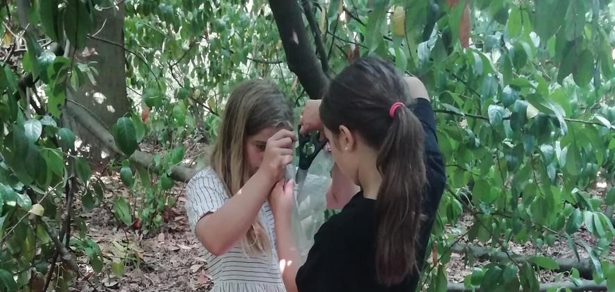Natuurknutsels