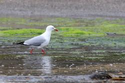 Seagull Wandern