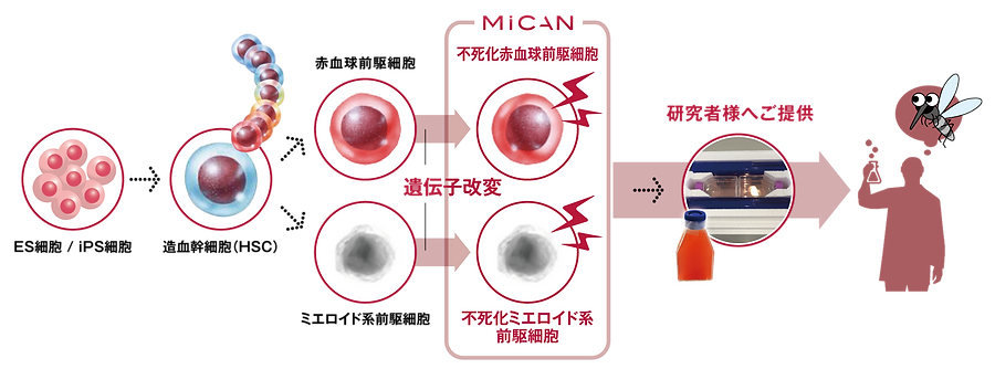 mican-site190422_urvision-pict-jpn.png