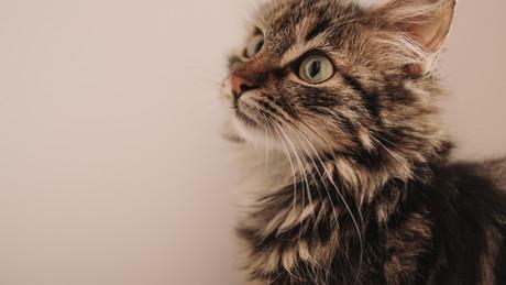 La première consultation chaton : une étape importante