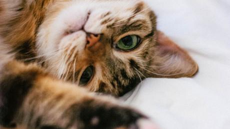 Enrichir l'environnement des chats