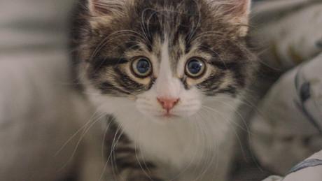 Adopter un chat adulte ou un chaton ?