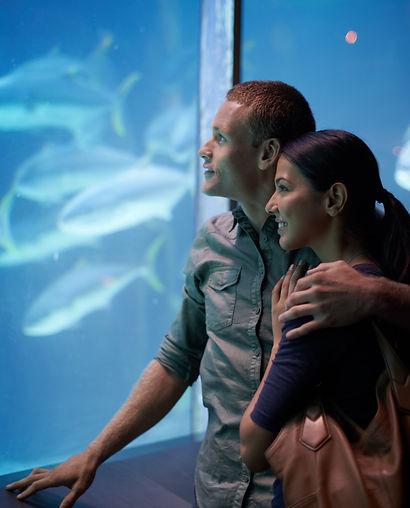 casal que olha peixes