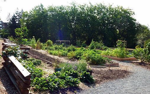 The Gardens' First Summer 2015