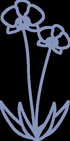 orquidea celeste.png