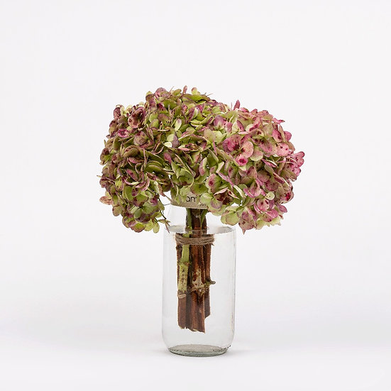 Bunch de Hortensias x 6