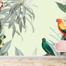 Tropical colorful birds wallpapersby lifencolors.