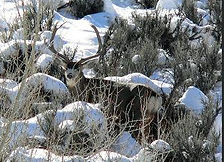 Hunting Lodge Gunnison Montrose Cimarron Colorado